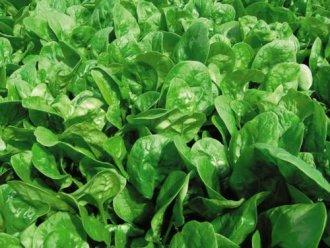 Misto di spinaci e ceci